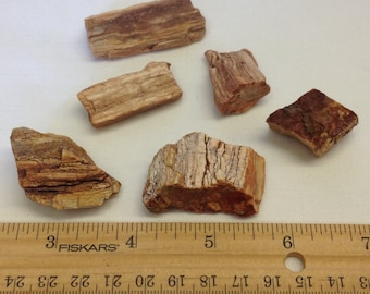 Petrified Wood Lot A1 - For Wire Wrapping - Pendant - Jewelry Supply  - Craft Supply - Earthy -