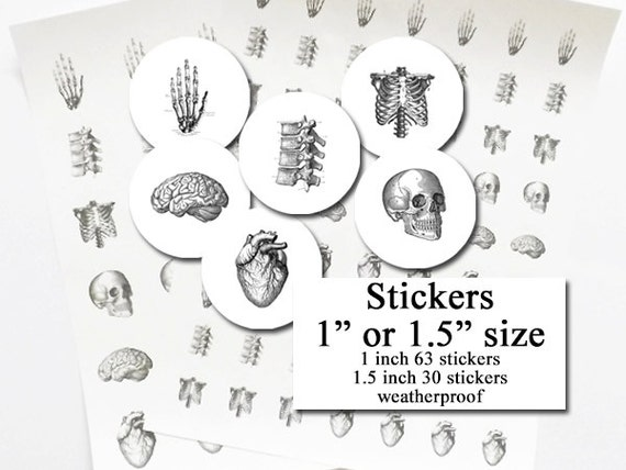 Anatomy STICKERS  doctor nurse graduation anatomical heart skull geek brain medical student party favor label envelope seal planner school