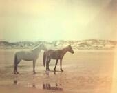 Dreamy beach photograph . wild horses . summer . ocean . beach .landscape photograph .Cumberland Island Georgia . sea shore cottage wall art