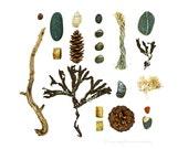 Beachcombing series No.68 - 8x10 photograph - driftwood, seaweed, shells