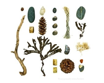 Beachcombing series No.68 - 8x10 photograph - driftwood, seaweed, shells