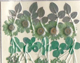 Real pressed flowers Designer Pack - Green
