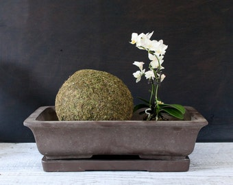 Large Vintage Bonsai Planter with Saucer, Zen Garden, Made in Japan, Dark Brown, 14 Inches Wide