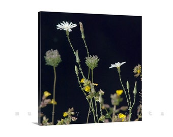 Wall Art Canvas, Flower Photography, Canvas Print, Wildflowers Art, Square Art, Flower Picture, Floral Art, Square Print, Ready to Hang
