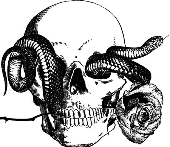 human skull snake tattoo art rose png digital graphics image