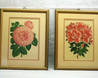 Set of 4 Framed Vintage Floral Prints