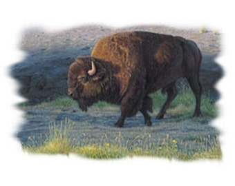 Adult Buffalo T Shirt The Wanderer Graphic on Quality T Shirt Free Shipping to USA 19503HL2