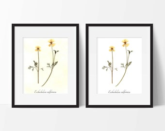California Poppy PRINT- Pressed Botanical Art