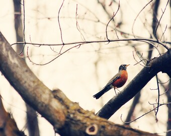 Robin Photography - Bird Photo - Robin Red Breast - Rustic Decor - Nature photograph - Cottage Chic - Wall Print - Home Decor