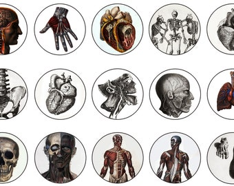 "1"" Inch Vintage Anatomical Images, Anatomical Drawings, Anatomical Pins Badges Magnets, Anatomical Flat Backs or Hollow Backs, 12 ct"