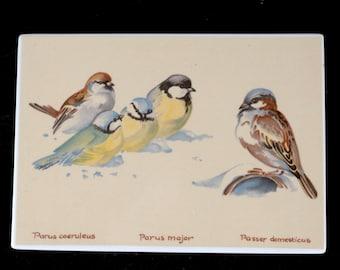 Vilbo Card, Villeroy & Boch, December, Birds (Parus)