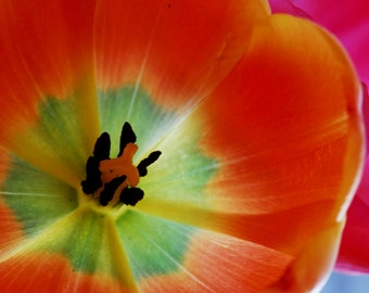Happiness is a Tulip