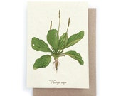 Plantain Card - Plantable Seed Paper