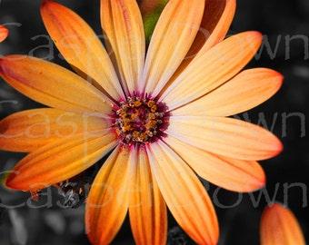 Flower Original Photograph Art Home Decor Colorful Bright Flower Daisy Photograph Wall Art