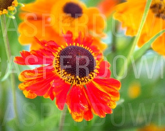 Flower Photograph Original Art Home Decor Colorful Bright Flower Red Orange Wildflowers Abstract Surreal Wall Art