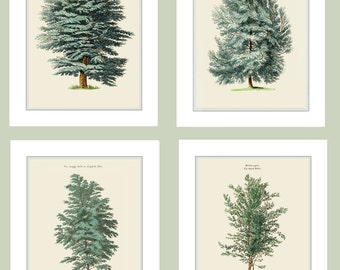 Set of Four Tree Prints. Cedar of Lebanon. Aleppo Pine. Black Birch. English Elm. Watercolored Drawing Giclee Prints. Woodland Tree Prints