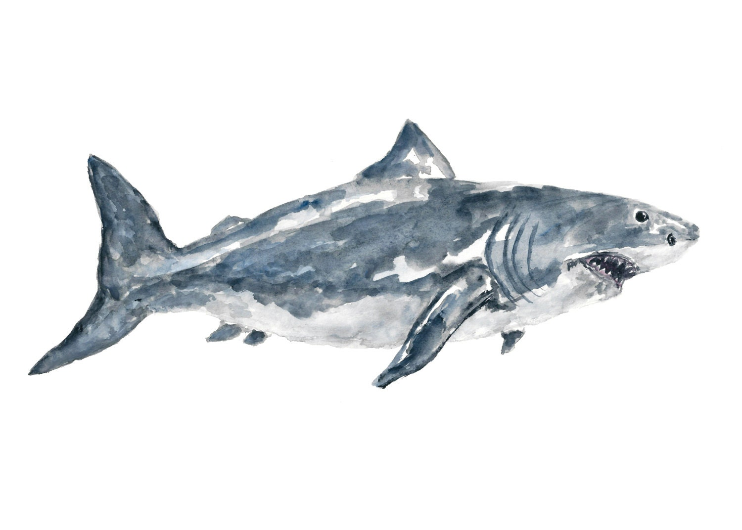 Uncategorized Shark Images To Print great white shark watercolor painting print art