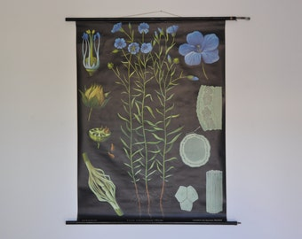 SALE 10% OFF Vintage Pull Down School Chart. Flax (Linum usitatissimum).  Jung Koch Quentell. Germany. 0980