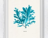 Vintage Ocean Kelp Seaweed in turquoise  No.01  - Antique Sea life Illustration - Marine  sea life illustration A4 print SPC069