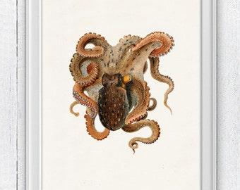 Vintage octopus n 26 - sea life print- Marine  sea life illustration A4 print- vintage natural history SPOJ075