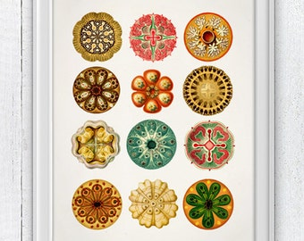 A natural mandala out of corals, sea urchins, shells, jellyfishes n01 - Home Wall Decor SAS131
