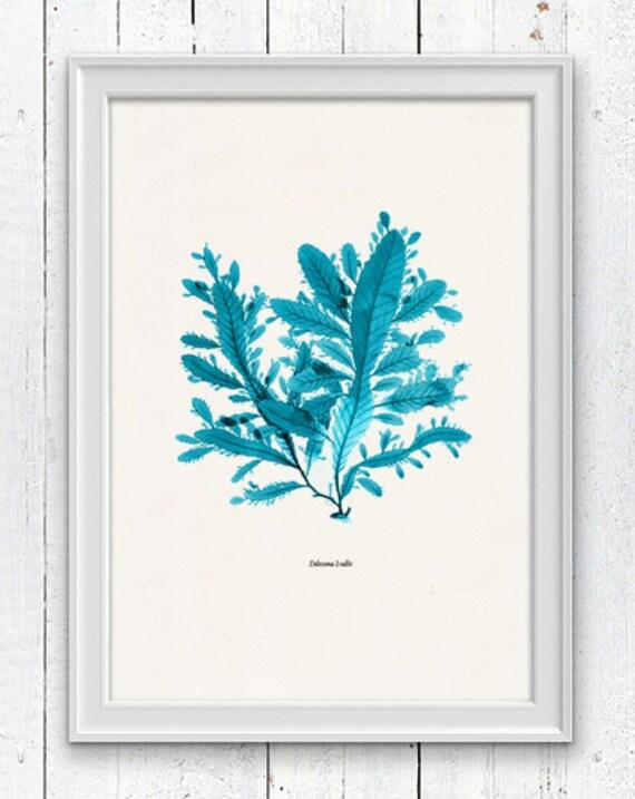 Vintage Ocean Kelp Seaweed in turquoise  No.01  - Antique Sea life Illustration - Marine  sea life illustration A4 print SPC069
