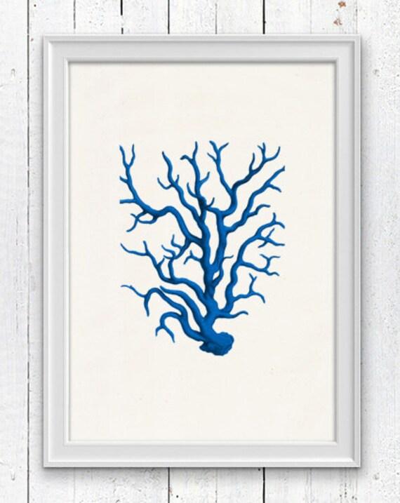 Blue coral - sea life print - Antique sealife Illustration , Marine  sea life illustration A4 print SPC023