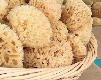 """Sea Wool Sponge 4""""-5"""" Cut"""