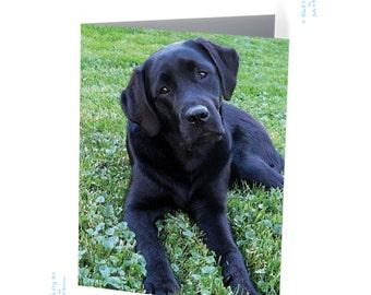 Black Lab card - Black lab puppy - Labrador retriever - Black Lab card - Labrador art -  Black Dog Art - Black Labrador retriever