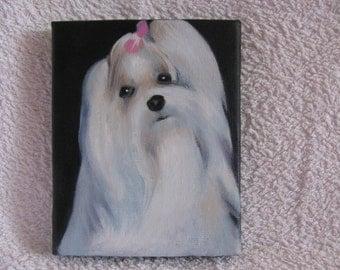 Original Oil Painting of a Cute Maltese Terrier.
