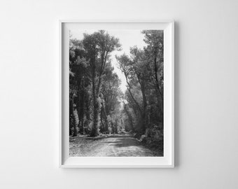 """42"""" x 58"""" Country Road Print - Black and White, Vintage Photography"""