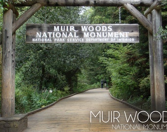 Muir Woods National Monument, California - Entrance Scene Photograph (Art Prints available in multiple sizes)