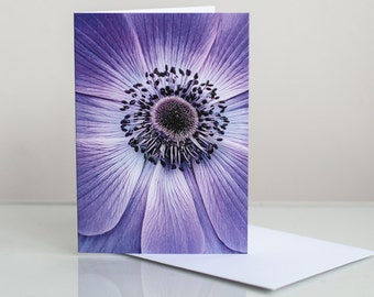 Photo greeting card. Floral greeting card. Flower greeting card. Anemone Photographic Greeting Card. Blank card