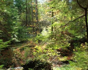 Forest Scenery (unframed)