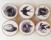 Schublade Knöpfe: Vogel-Ei und Schachteln aus Holz Knöpfe, schwarz und weiß Holz Knöpfe - 1 1/4 Zoll - Set 6
