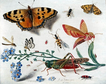 Insects and Flowers 1653 reproduction print from painting by Jan Van Kessel the Elder
