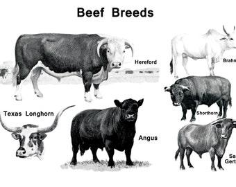 Vintage Beef Breeds Poster, Cattle, Texas Longhorn, Hereford, Brahman, Angus, Shorthorn, Santa Gertrudis