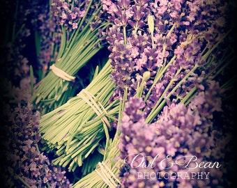 Bunches of Lavender, Blank Greeting Card, Fine Art Photography, Nature and Flowers,  5x7 Card