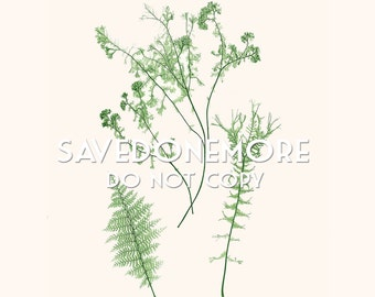 Vintage Botanical Fern Print Instant Download Make Your Own Art {Fern 34}