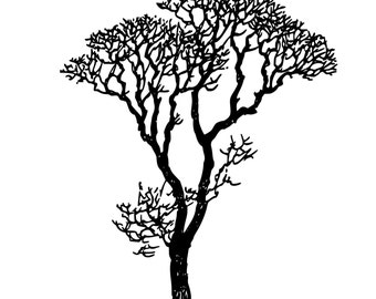 Bare Tree Branches Beautiful Die-Cut Decal Car Window Wall Bumper Phone Laptop