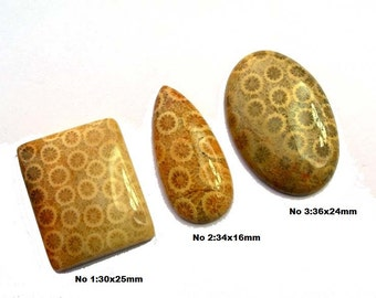 1Pc 100% Natural Fossil Coral Designer Cabochons - Mix Shape n Size Gemstone Cabochons, Gemstone Cabs Bulk SKU2295