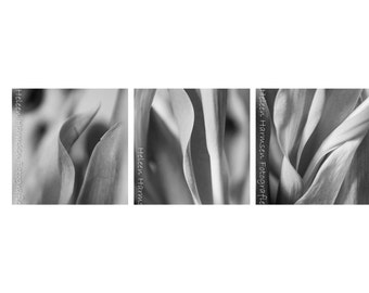 Abstract - Black&White  3 ready to hang canvas