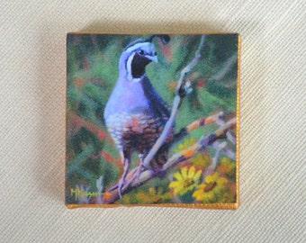 California Quail Magnet/ Bird Magnet / Quail Mini Canvas Magnet