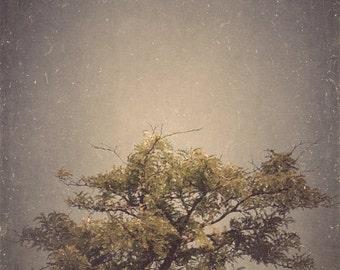 Metallic Single Tree Photo