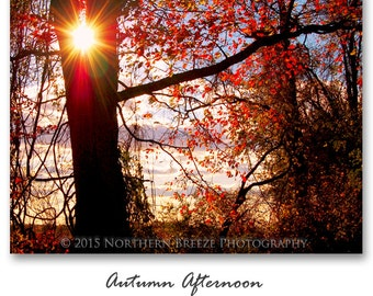 Autumn Afternoon - Fine Art Photography, Archival Photo Print, 5x7, 8x10, A6 Stationery