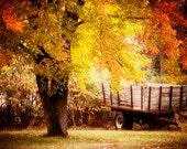 Wisconsin Art, Fall Photography, Autumn Landscape Photos, Horse Cart Photo, Fall Foliage, Warm Colors, Colorful Photography, Orange Color