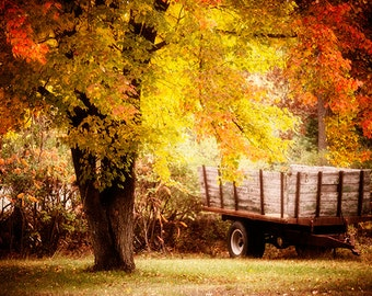 Wisconsin Art, Fall Photography, Autumn Landscape Photos, Horse Cart Photo, Fall Foliage, Warm Colors, Colorful Photography, Orange Color