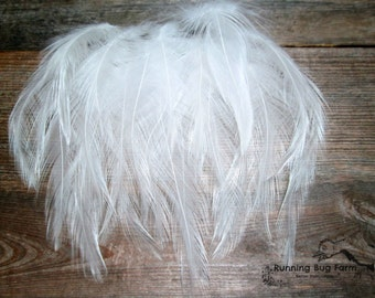 """Hackle Feathers White Feather Real Bird Feather Loose Feather Natural Feather Assortment White Wyandotte Rooster Feather 20 @ 3 - 3.5"""" / WW9"""