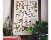 Antique Mushroom Poster - Vintage Botanical Mushroom Diagram. Variety of Mushrooms and Fungi Educational Chart Diagram  Millot. CP239