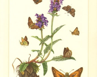 1956 Butterflies, Chequered Skipper, Silver-spotted Skipper, Mallow Skipper, Large Chequered Skipper Vintage Offset Lithograph